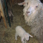 Ginger with Newborns Sienna and Jasmine (2003)