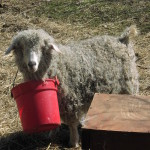 Ginger Wearing Bucket (Nov 2001)